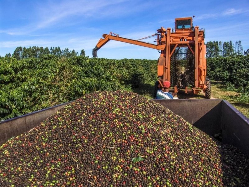 Oficina Sebrae online - Agricultura Sustentável