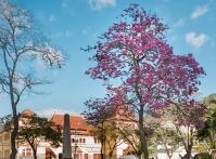 A esta��o das flores chega nesta quarta-feira para dar ainda mais charme a Nova Friburgo